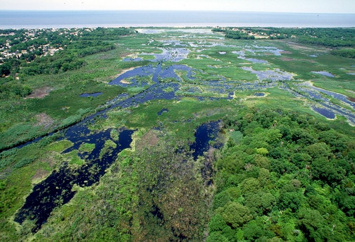 Wetlands_Cape_May_New_Jersey
