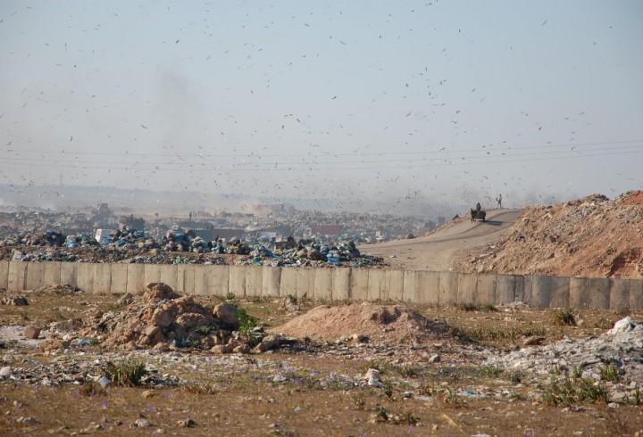 La décharge de Médiouna, Casablanca, Maroc. Tou·te·s les acteur·e·s des déchets sont présent·e·s : camions des intermédiaires semi-grossistes, récupérateur·e·s, charrettes et ânes des ramasseur·e·s de déchets verts pour animaux, camions-bennes des sociétés de collecte, bulldozer de la société qui gère la décharge, vaches et moutons des éleveur·e·s, au fond à gauche (Photo B. Florin, 2012)